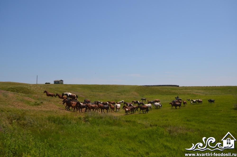 Конные прогулки на Песчаной балке